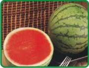 Buy Watermelons