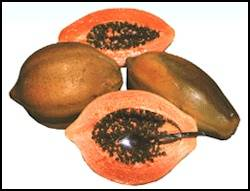 Compro Semillas de Papaya Tainung Hib.