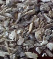 Comprar Yuca humeda y seca industrial