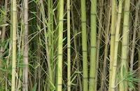 Comprar Productos de bamboo