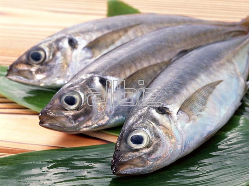 Comprar Pez de mar