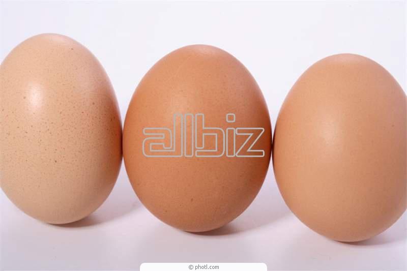 Comprar Huevos de aves de corral a consumir