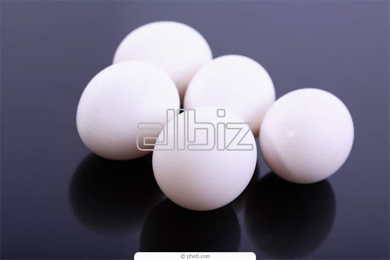Comprar Huevos de broiler de incubación