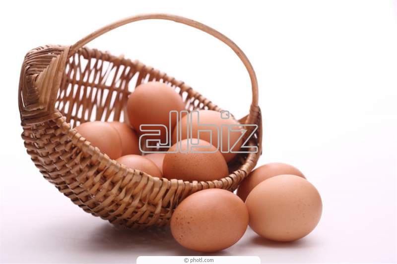 Comprar Productos de huevos