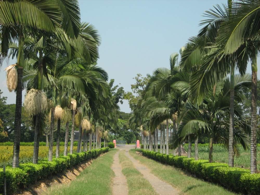 Comprar Semillero palmas