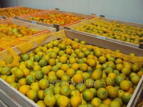 Comprar Naranja VALENCIA