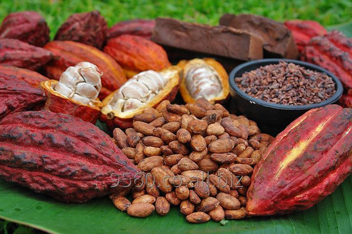 Comprar Cacao En Grano