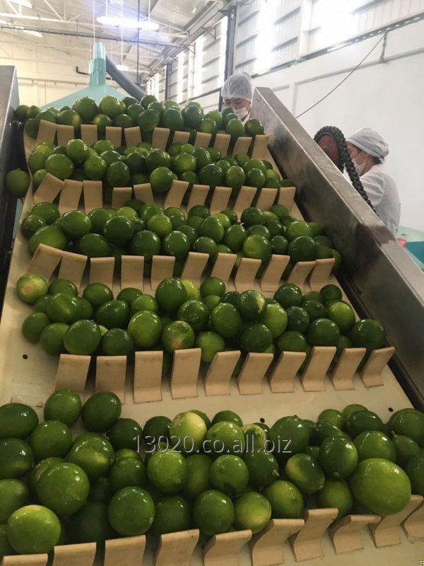 Comprar Limon tahiti