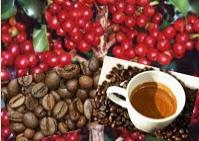 Comprar Café Arábica