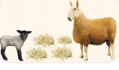 Comprar Alimentos para animales