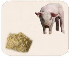 Planes Flexibles en Porcicultura