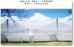 Malla Poli - Thrips