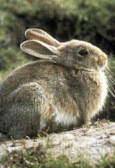 Alimentos  para Animales  Linea Conejos