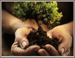 Plantones de árboles