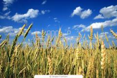 Linea de preparados agroquimicos