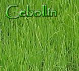 Cebollín (Allium schoenoprasum )