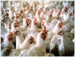 Enzimas para Nutrición Animal