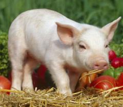 Aditivos a Alimentos Animales
