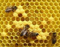 Producción de apicultura