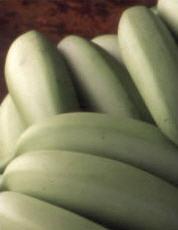Bananas Musa acuminata