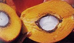 Aceite de palmera