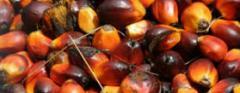 Aceite crudo de palma vegetal orgánico