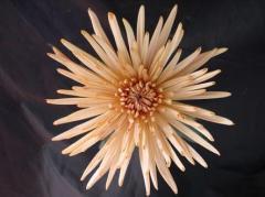 Flores Anastasias Bronze