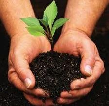 Abonos orgánico-minerales humatizados
