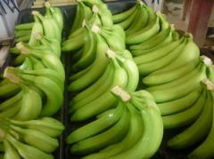 Bananas cavendish