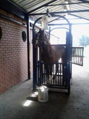 BRETE FOR HORSES
