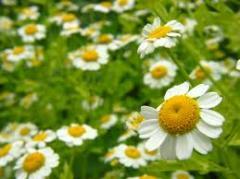 Plantas medicinales y aromaticas 100% organicas