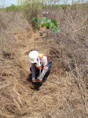 Fumigación de Maleza e Insectos, Recolección y Manejo de Fauna, Corte y Reforestación de árboles