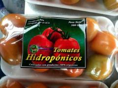 Tomate chonto hidroponicos