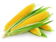 Mazorca Tierna en Bandeja - Sweet Corn