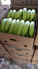 Plátano Referencia Harton