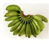 Baby Banano