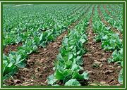 Nitrato de potacio