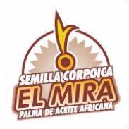 Semilla El Mira Palma de Aceite Africana