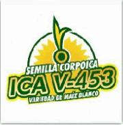 Variedad de Maíz Blanco ICA V-453