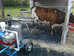 Milking equipment for goats and sheep