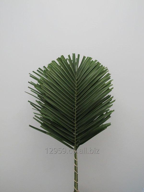 palma-rovelina