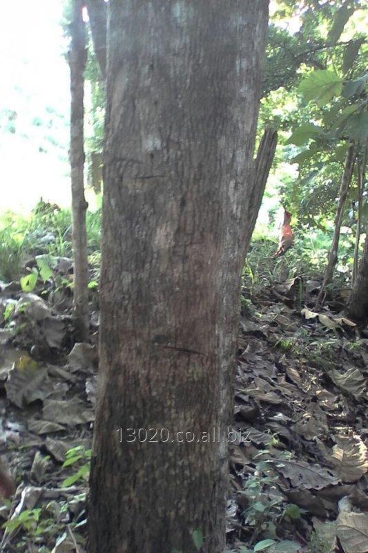 madera_teca