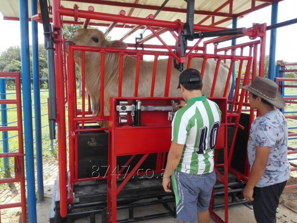 brete_bascula_ganadero_mecanico_y_full_electronico