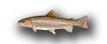 La Trucha (Oncorhynchus mykiss)