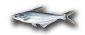 Pangasius (Pangasius hypophthalmus )