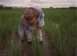 Pese a subsidios, seguros agrícolas tienen baja cobertura