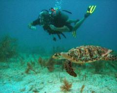 Enseñanza de diving