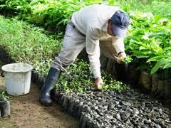 Artículos para agricultura