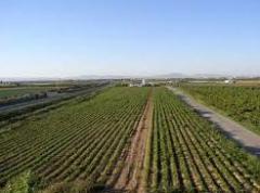 Seguridad de las explotaciones agrícolas