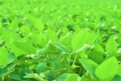 Analisis de laboratorio de residuos tipo agricola cromatografia Gaseosa